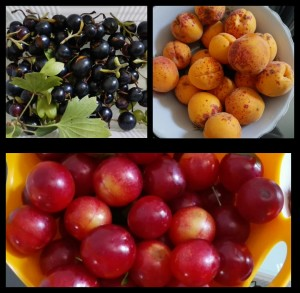 fruits from cleaning lady 2017-07-14_11-49-20